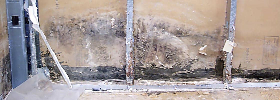 Mold Remediation -01